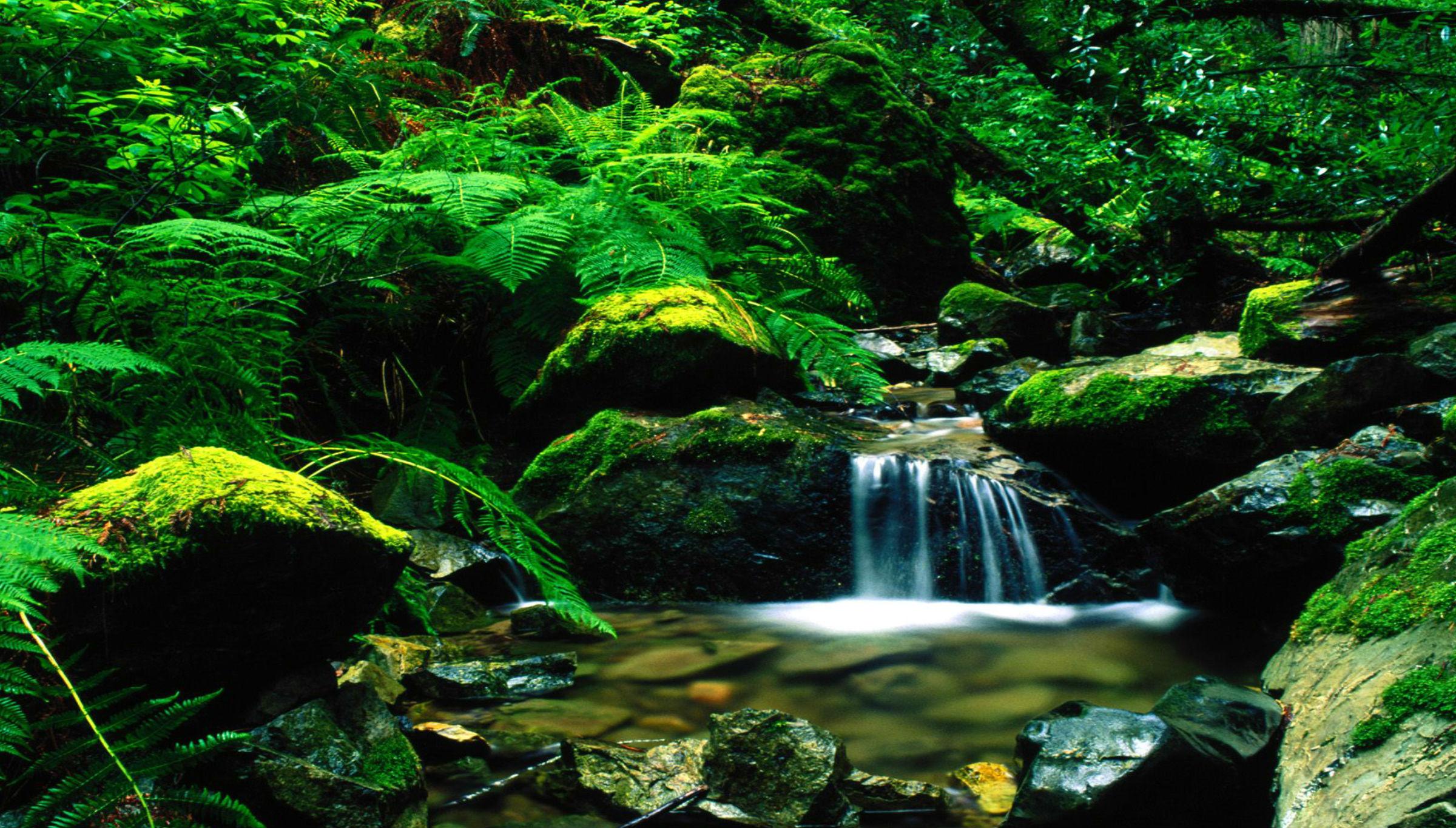 红茶沟国家森林公园