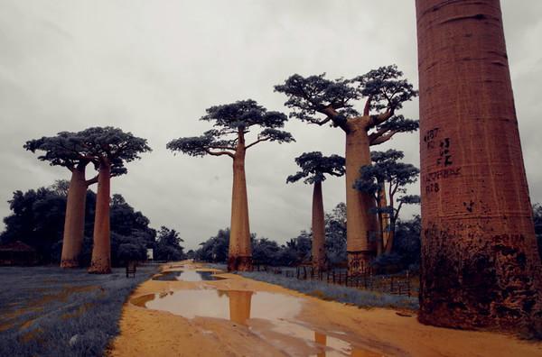 马达加斯加盛产宝石,香草,木雕,当地制作的手工艺品也很有意思,都可以