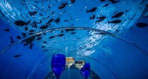 马尔代夫世界上最大海底餐厅惊艳眼球