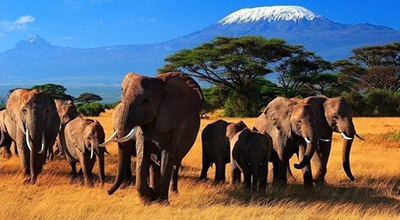 肯尼亚11天8晚经济游