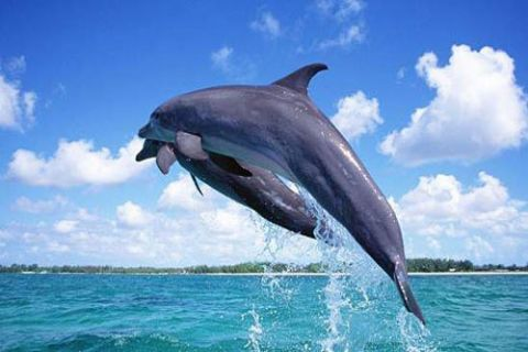 毛里求斯西部生态之旅一日游