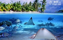 大溪地波拉波拉岛出海喂鲨鱼浮潜一日游